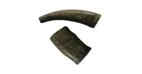 Wasserbüffelhorn